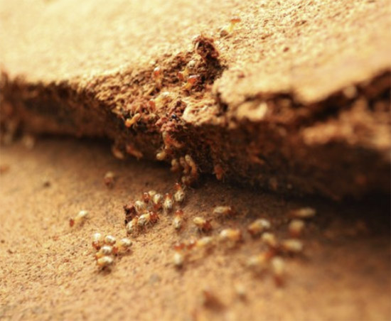 Types of Termite Management Systems